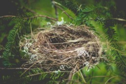 Finding God in an Empty Nest